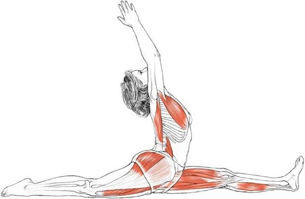 muscles sollicités leg extension