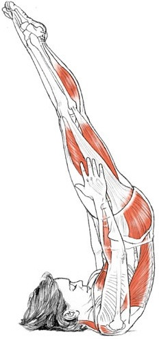 How to Do Shoulderstand (Salamba Sarvangasana) in Yoga advise